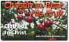 Chosen to Bear Christ's Fruit